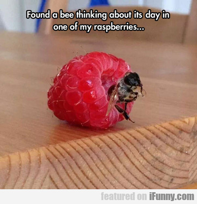 Found A Bee Thinking About His Day Inside A...