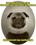 Little Known Historical Dog Fact