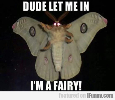 Dude, Let Me In... I'm A Fairy!
