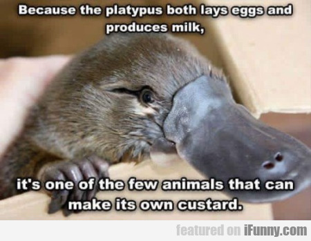 Because The Platypus Both Lays