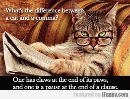 Whats The Difference Between A Cat