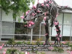 A Flock Of Lawn Flamingos Can Pick A T-rex Clean
