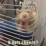 Pst U Gots Cheeze