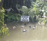 Beware Of Crocs...