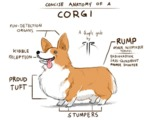 Concise Anatomy Of A Corgi
