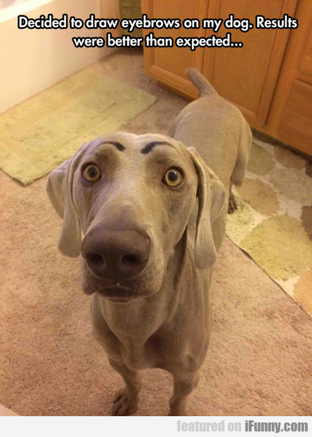 decided to draw eyebrows on my dog