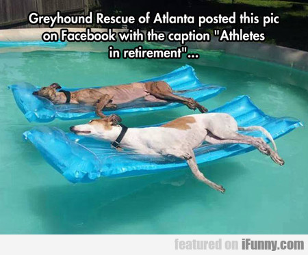 Greyhound Rescue Of Atlanta Posted This Pic