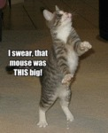 I Swear, That Mouse Was This Big!