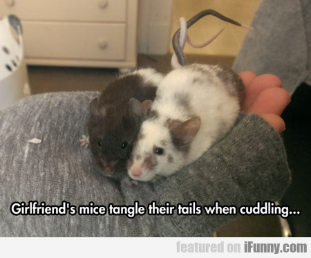 Girlfriend's Mice Tangle Their Tails...