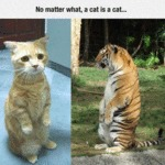 No Matter What, A Cat Is A Cat...