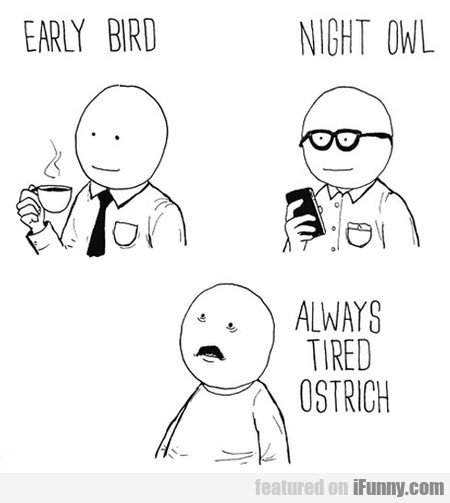 what kind of bird are you?