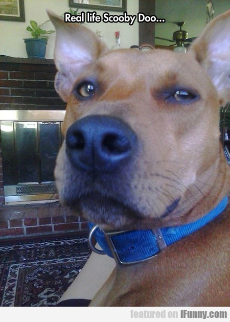Real Life Scooby Doo...