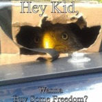 Hey Kid, Wanna Buy Some Freedom?