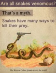 Are All Snakes Venomous?