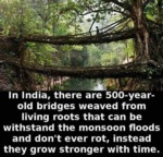 In India, There Are 500-year-old Bridges...
