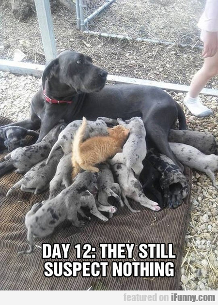 day 12 - they still suspect nothing