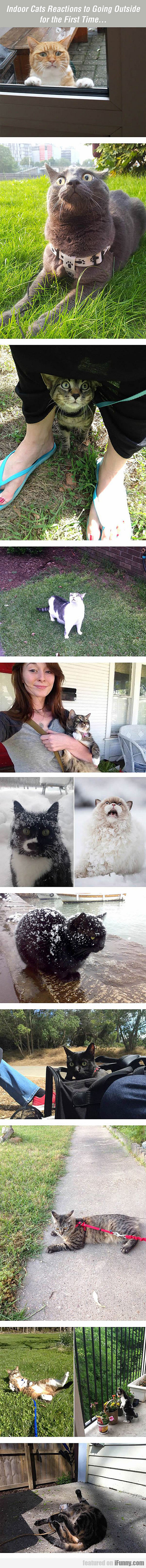 indoor cats reactions to going outside...