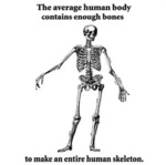 The Average Human Body Contains Enough Bones...