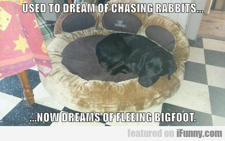 Used To Dream Of Chasing Rabbits