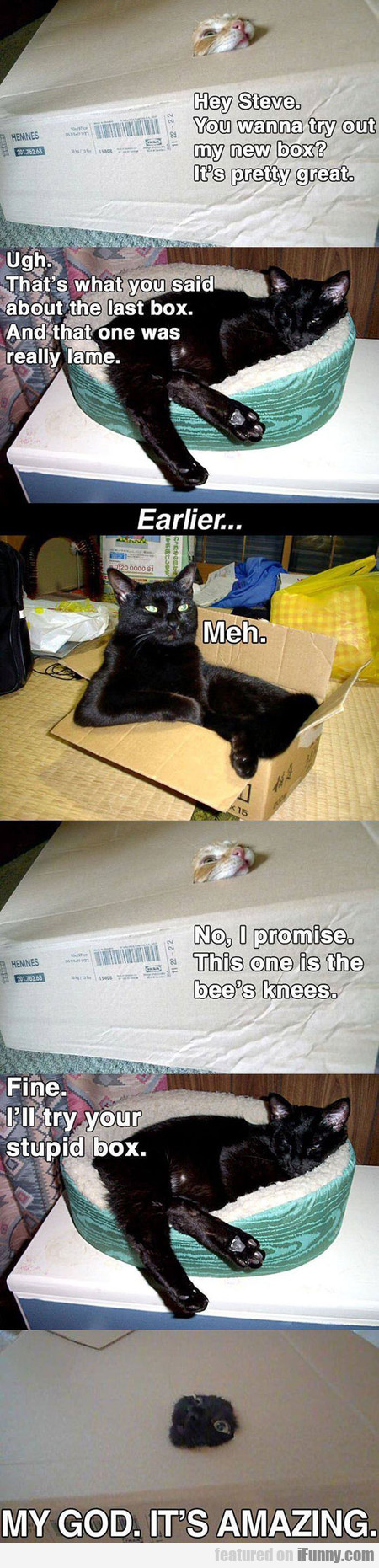 Cats Try A New Box