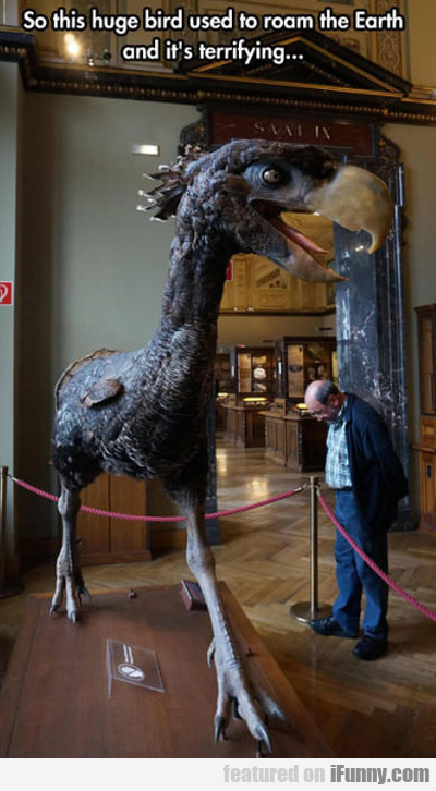 So This Huge Bird Used To Roam The Earth...
