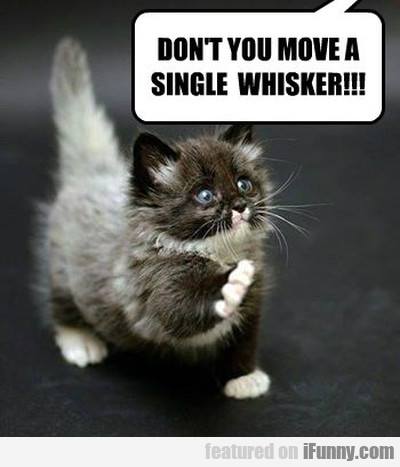 Dont You Mov A Single Whisker