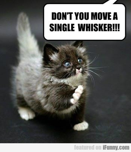 dont you move a single whisker
