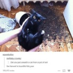 Did You Jus Unearth A Cat From A Pot