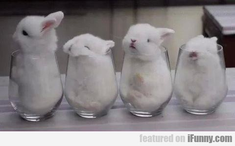 I'll Take Ten Glasses Of Bunny To Go Pls