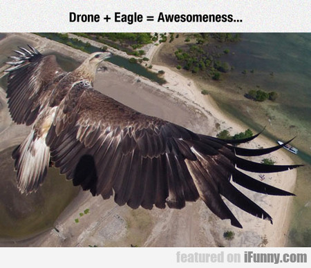 Drone + Eagle = Awesomeness...