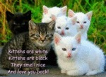 Kittehs Are White Kittehs Are Black