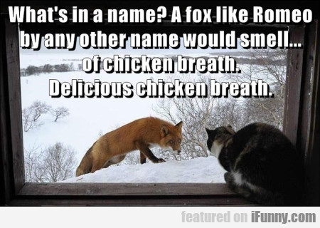 Whats In A Name A Fox Like Romeo