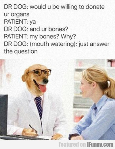 Dr Dog Would You Be Willing To Donate