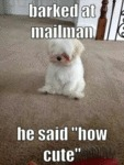 Barked At Mailman He Said How Cute