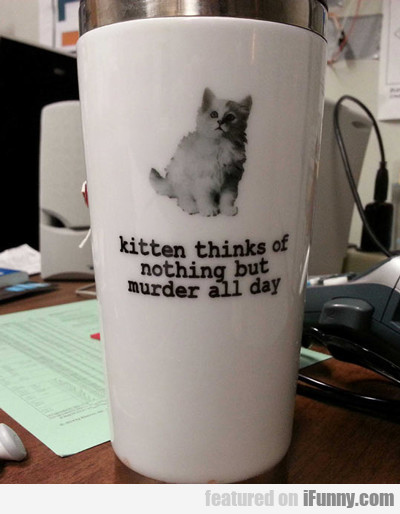 Kitten Thinks Of Nothing But Murder...
