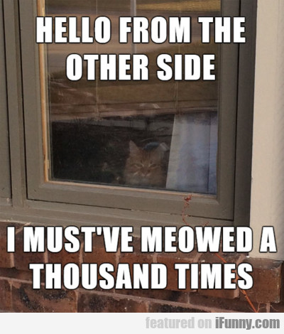 Hello From The Other Side, I Must've Meowed...