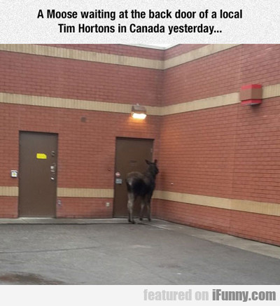 A Moose Waiting At The Back Door...