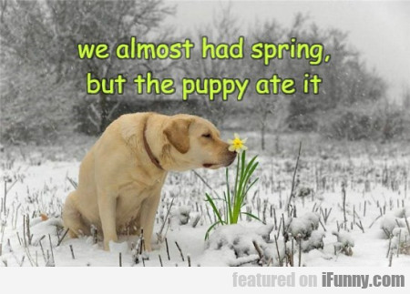We Almost Had Spring But The Puppy