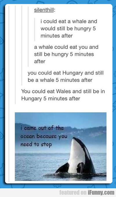 I Could Eat A Whale...