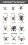 Spider Identification Chart...