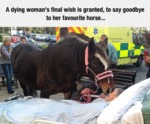 A Dying Womans Final Wish Is Granted
