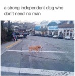A Stronf Independent Dog Who Dont Need
