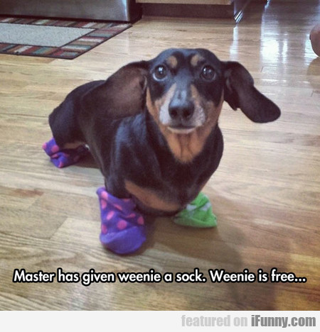 Master Has Given Weenie A Sock