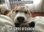 Good Morning! It's Pee O'clock!