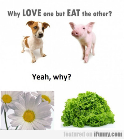 Why Love One But Eat The Other...