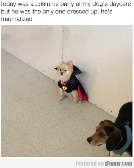 Today Was A Costume Party At My Dog's Daycare