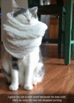 I Gave My Cat A Mini Scarf Because He Was Cold