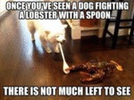 Once You've Seen A Dog Fighting...