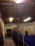 This Dog Spent His Time In The Kennel Learning...