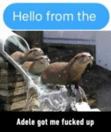 Hello From The Otter Slide..